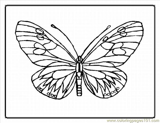 Tterfly Coloring Pages 1lrg Coloring Page