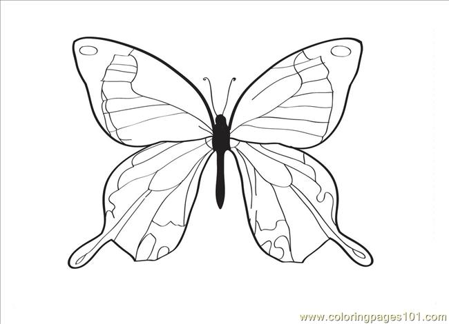 Tterfly Drawing Coloring Page Coloring Page - Free Butterfly ...