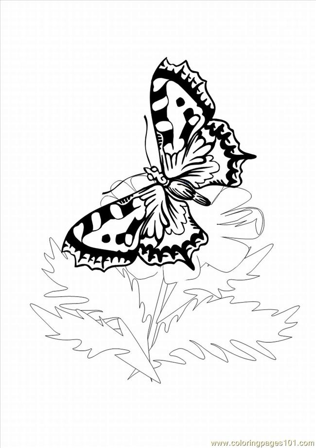 Utterfly Coloring Pages 1 Coloring Page