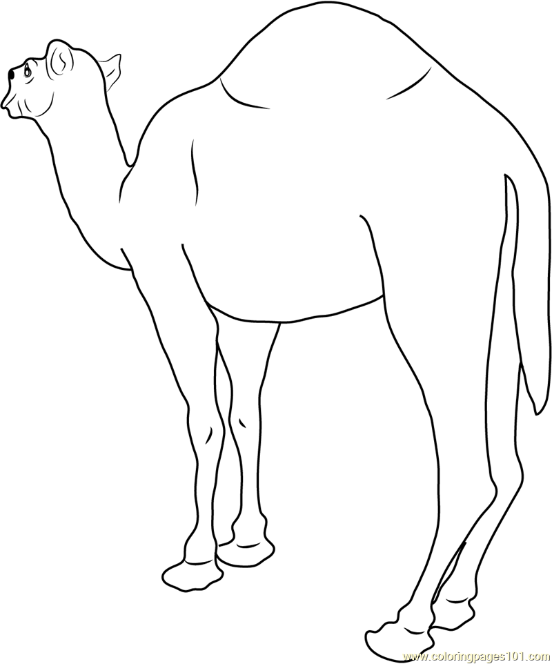 Free Coloring Pages Of Bactrian Camel