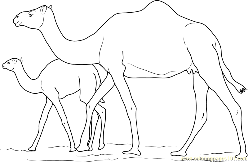 Baby Camel with her Mother Coloring Page Free Camel Coloring