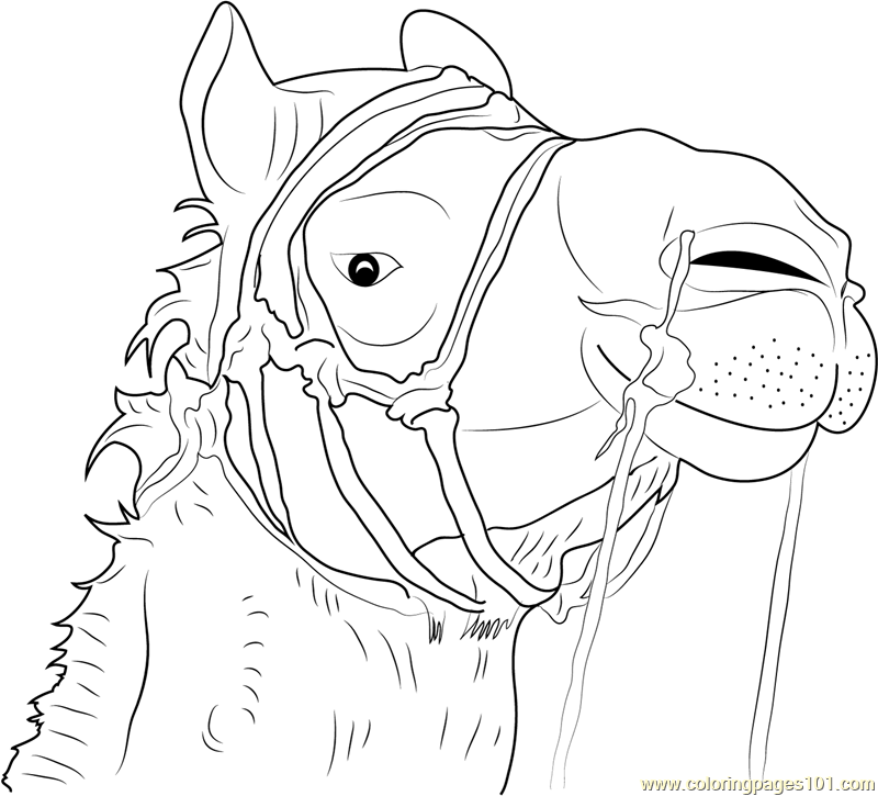 coloring pages camel face - photo#22