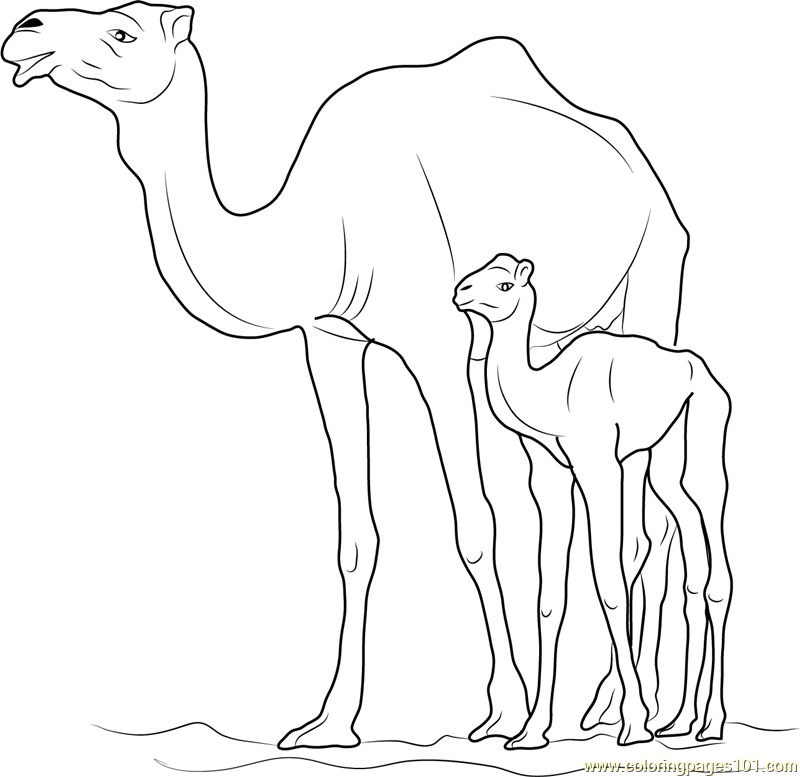 Camel with Kid Coloring Page