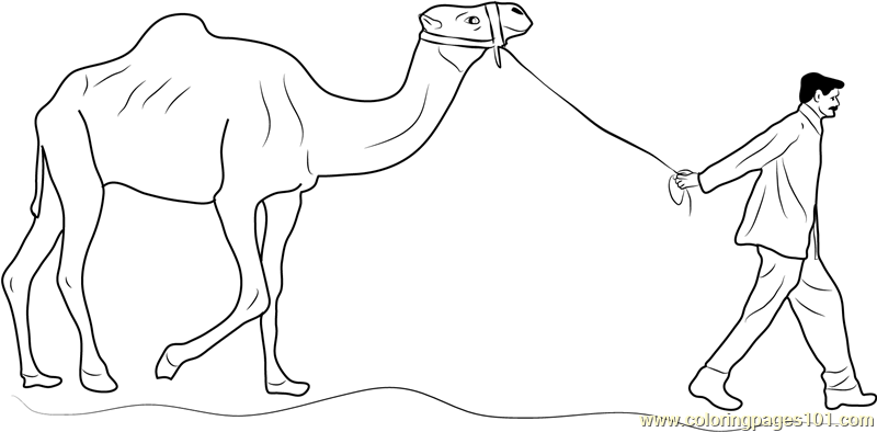 Anime Camel Coloring Pages