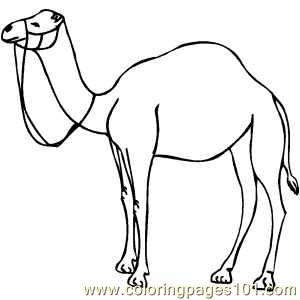 Camel Coloring Page Coloring Pages
