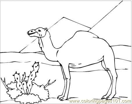 Camel In Desert Coloring Page Coloring