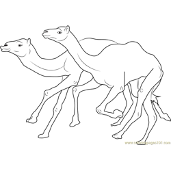 Camel Racing Free Coloring Page for Kids