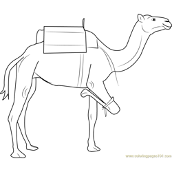 Camel having Three Legs Free Coloring Page for Kids