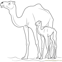 Camel with Kid