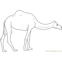 Camels on Road coloring page