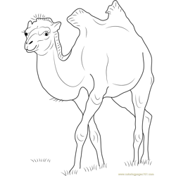 Camelus bactrianus Free Coloring Page for Kids