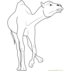 Crazy Camel Free Coloring Page for Kids