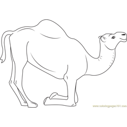 Kneeling Camel Free Coloring Page for Kids