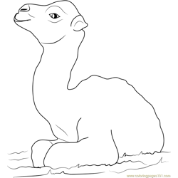 Little Baby Camel Free Coloring Page for Kids