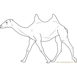 Two Humped Bactrian Camel Free Coloring Page for Kids