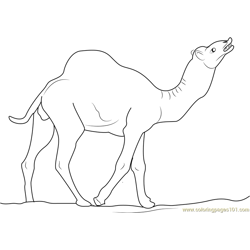 Wild Camel Free Coloring Page for Kids