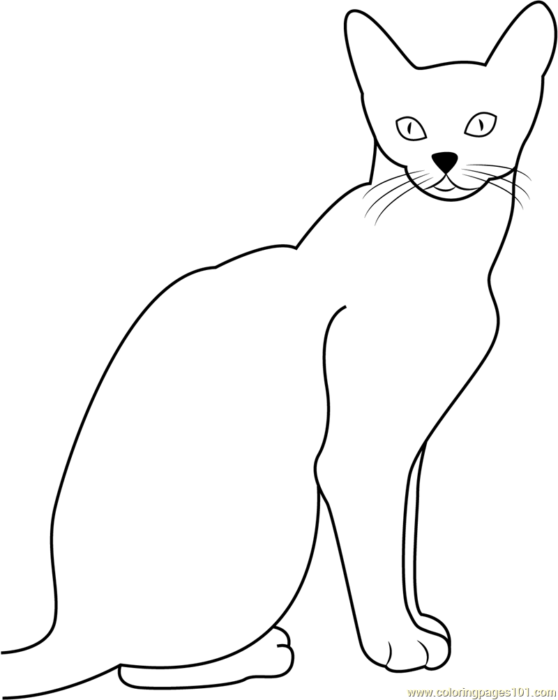 Abyssinian Cat Coloring Page Free Cat Coloring Pages