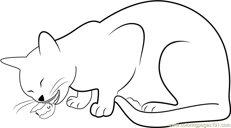 Cat Eating Bid Coloring Page