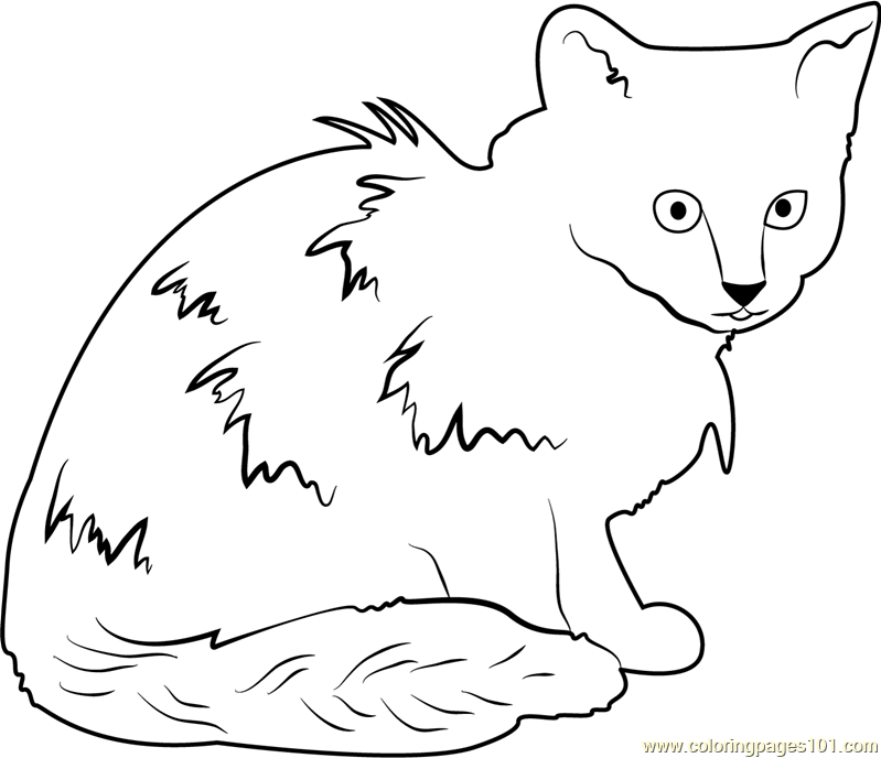Cat Looking Dirty Coloring Page - Free Cat Coloring Pages ...