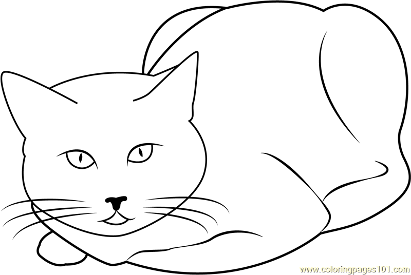 Cat Sitting and Staring Coloring Page Free Cat Coloring