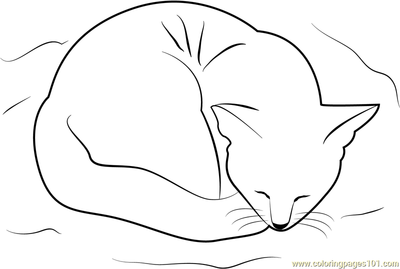Cat Sleeping on her Bed Coloring Page