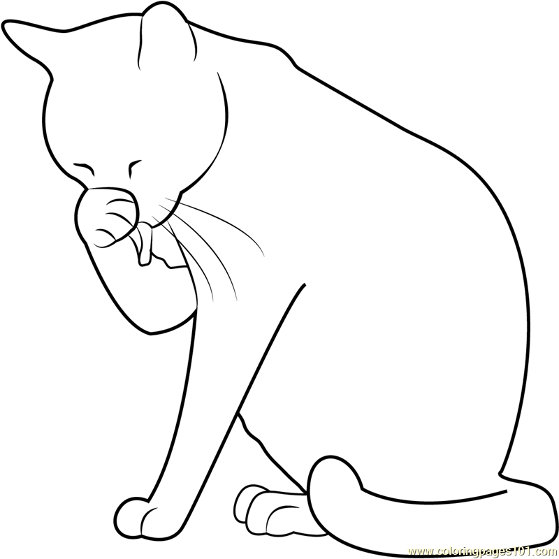 Cat washing her face coloring page