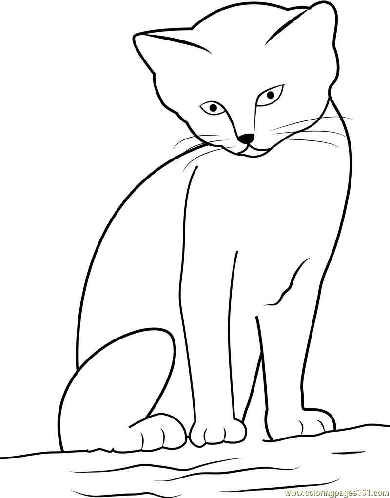 Cat looking Cute while sitting on Sand Coloring Page