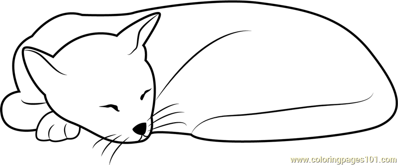 Sleeping Cat Looks Cute Coloring Page