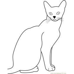 Abyssinian Cat Free Coloring Page for Kids