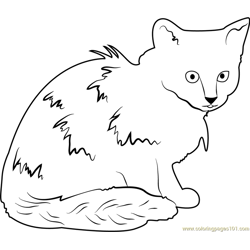 Cat Looking Dirty Free Coloring Page for Kids