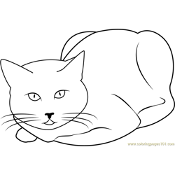 Cat Sitting and Staring Free Coloring Page for Kids