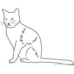 Cat Staring Forward Free Coloring Page for Kids