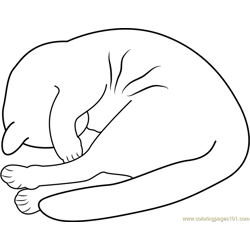 Cat covering its face with the paw