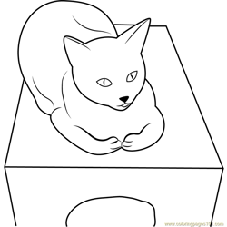 Cat is sitting on Box Free Coloring Page for Kids