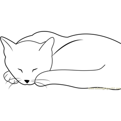 Cat looking Cute while Sleeping Free Coloring Page for Kids