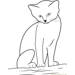Cat looking Cute while sitting on Sand Free Coloring Page for Kids