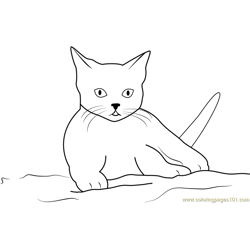 Cute Cat Sitting on Sand Free Coloring Page for Kids