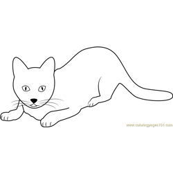 Cute Domestic Cat Ginger Free Coloring Page for Kids