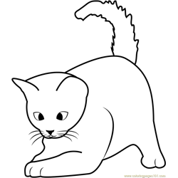 Cute Kitten Playing Free Coloring Page for Kids