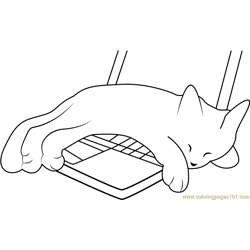 Kitten Sleeping on Laptop