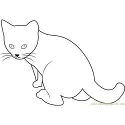 Six Weeks Old Cat Free Coloring Page for Kids