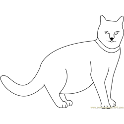 Staring Fatty Cat Free Coloring Page for Kids
