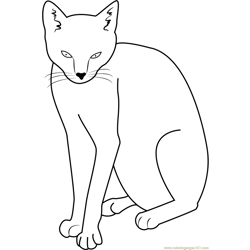 Wow Cat coloring page