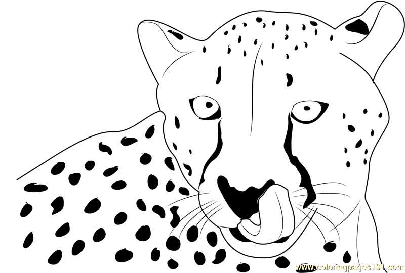 Cheetah Sitting Coloring Page Free Cheetah Coloring Pages