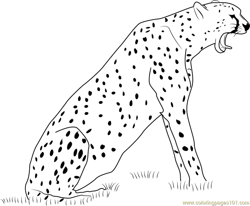 Cheetah Howling Coloring Page  Free Cheetah Coloring Pages