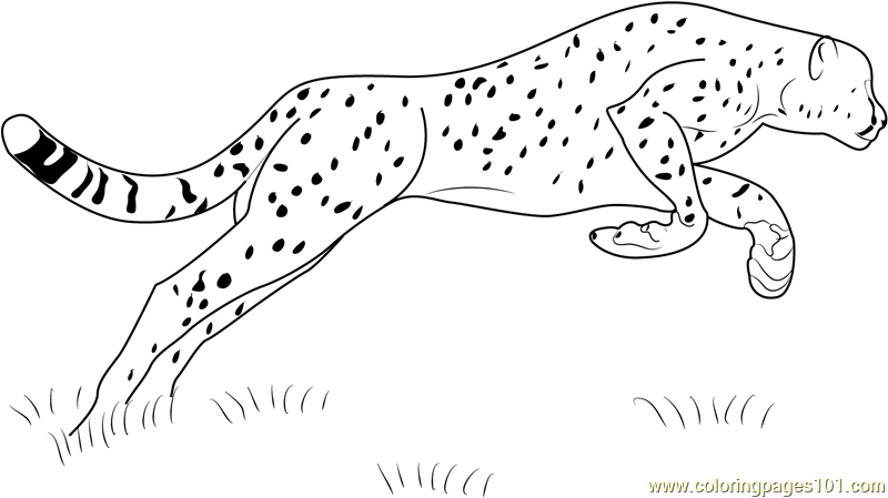 Cheetah Jumping Coloring Page  Free Cheetah Coloring Pages
