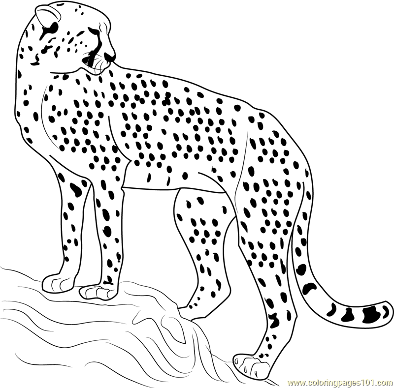 Cheetah looking back coloring page free cheetah coloring for Free cheetah coloring pages