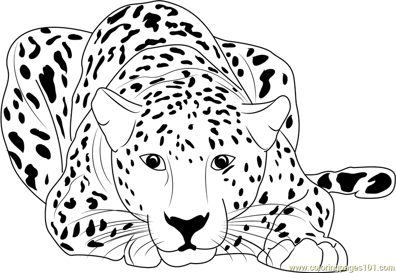 Cheetah Sitting Coloring Page