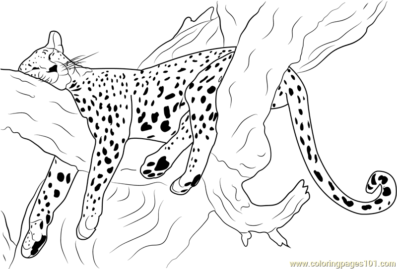 Cheetah Sleeping Coloring Page