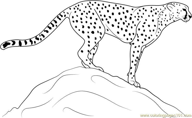 Cheetah Standing on Rock Coloring Page Free Cheetah Coloring